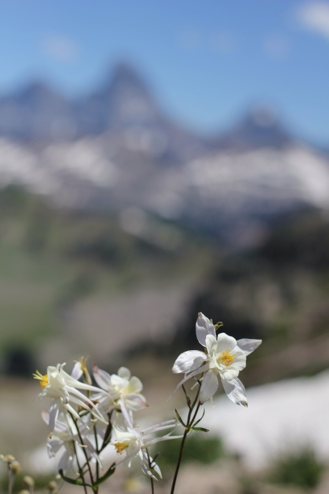Wild columbines with The Grand Tetons in the distance