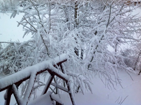 This is our backyard six months a year...we know warm when we feel it!